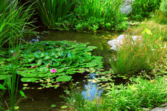 Pond landscaping stock images