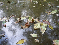 Pond and leafage Royalty Free Stock Image