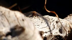 Pond, libélula no parque estadual velho de Grandview do log, WV filme