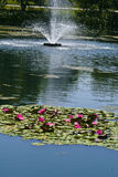 Pond with Lilies Stock Images