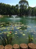 Pond. With lilies in Kharkiv, fountain, trees Royalty Free Stock Image