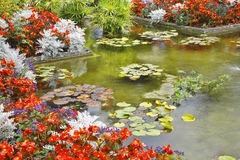 The pond with lilyes Stock Photo