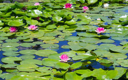 Pond Royalty Free Stock Images