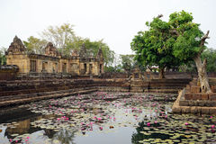 Pond with lotuses Stock Image