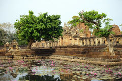 Pond with lotuses Stock Photography