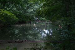 Pond with low hanging trees reflecting in the water. Pond with low hanging trees projecting over the water and reflecting in the pond surface, the pond full of Royalty Free Stock Photo