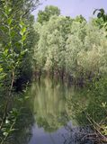 Pond and marsh environment with plants in a natural park 4 Royalty Free Stock Images