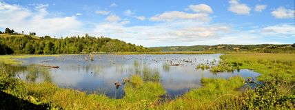 Pond in marshland on the island of Chiloe. Pond with water birds in swampy marshland on the island of Chiloe, Patagonia Southern Chile stock images