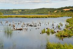 Pond in marshland on the island of Chiloe Royalty Free Stock Photography