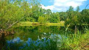 Pond in Maydelle, Texas. stock image
