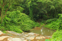 Pond in the middle of a jungle forest Stock Image
