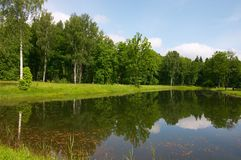 Pond mirror. Park. Trees. Reflection in pond clear water Royalty Free Stock Images