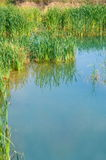 Pond mirror. Royalty Free Stock Photography