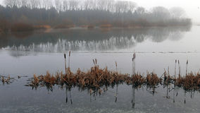 Pond in misty morning . Royalty Free Stock Image