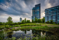 Pond and modern buildings at Corktown Common, in Toronto, Ontari Royalty Free Stock Images