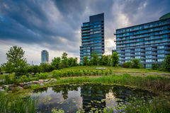 Pond and modern buildings at Corktown Common, in Toronto, Ontari Royalty Free Stock Image