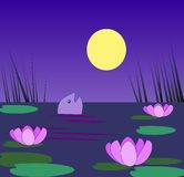 Pond in moonlight. A pond with water lilies and fish in Stock Image