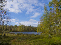 Pond in the moor. Beautiful pond in the bog Royalty Free Stock Photography
