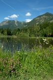 Pond Moorweiher nearby Oberstdorf with flowers in foreground Royalty Free Stock Images