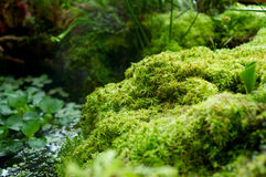 Pond with moss macro Stock Image