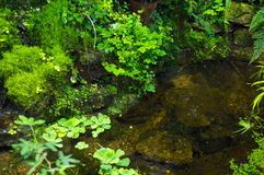 Pond with moss and plants Stock Photo