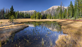 Pond with Mountain reflection. This photo was taken on the Highline trail in Utah Royalty Free Stock Photos