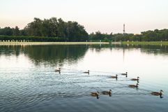 Pond of museum-estate Kuskovo, Moscow. Royalty Free Stock Photography