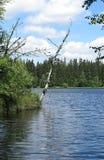 Pond in the Natural Preserve  Kladska peats Royalty Free Stock Photos