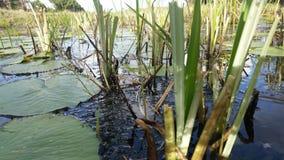 Pond near the beach Stock Photography