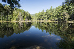 Pond near Kennebunkport. Calm Pond near Kennebunkport Maine in late summer Stock Images