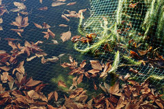 Pond net Royalty Free Stock Images