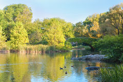 Pond in the New York central park Royalty Free Stock Photo