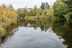 Pond In Normandy Park Stock Photography