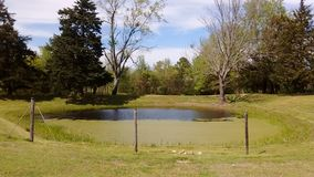 Pond outside my home Stock Photo