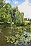 The  pond, overgrown with lilies Royalty Free Stock Photo