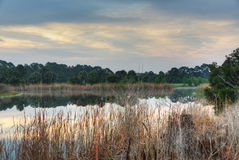 Pond in Palm Bay, Florida Royalty Free Stock Photos