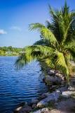Pond and palm, Samui island, Thailand Stock Photos