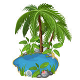 Pond with palm, stones, seashells and sand around vector illustration