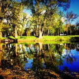 Pond in a park in autumn Royalty Free Stock Image