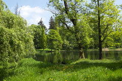Pond in the park Stock Photography