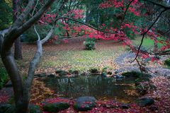 Pond in the Park. On a dark autumn day with colorful leaves stock images