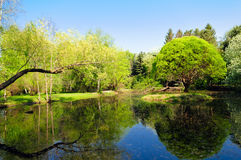 Pond in park landscape Stock Photo