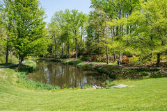 Pond in park. Nice bright day in the park with the pond Stock Photo
