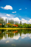Pond in park Royalty Free Stock Photography
