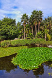 Pond in park at Tenerife - Canary Spain Royalty Free Stock Photo
