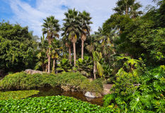 Pond in park at Tenerife - Canary Spain Royalty Free Stock Photos
