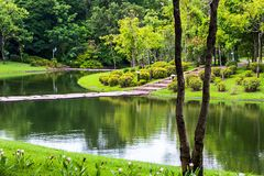 Pond in the park. Royalty Free Stock Image