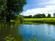 Pond in a park Stock Photo