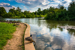 The pond at Patterson Park in Baltimore, Maryland. The pond at Patterson Park in Baltimore, Maryland stock photos