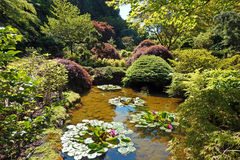 Pond. Picture taken in the Japanese garden at Butchart gardens,Victoria,Canada Stock Images